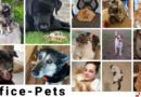 Office Pets| Vorteil für Arbeitgeber und -nehmer
